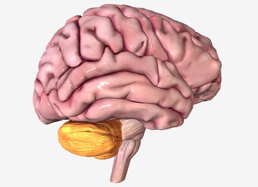 Las once cosas que debes hacer para cuidar tu cerebro
